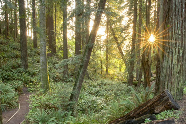 4 Hikes if You Have an Hour