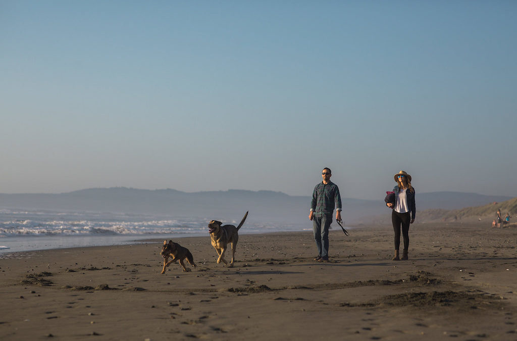 3 Places to Take Your Furry Best Friend