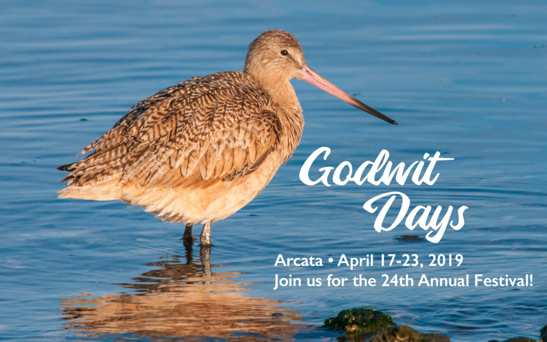 24th Annual Godwit Days Festival on April 17- 23, 2019