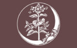 Moonrise Herbs