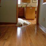 Arcata Pro Floor